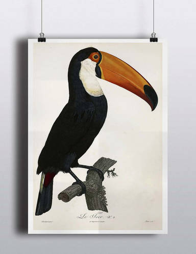 Antique Toucan Poster