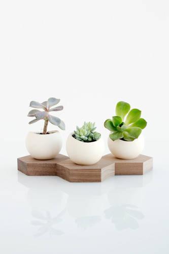 Hex Spora - Ceramic + Walnut