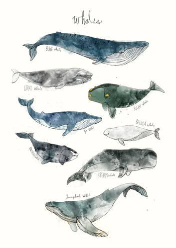 Whales Art Print